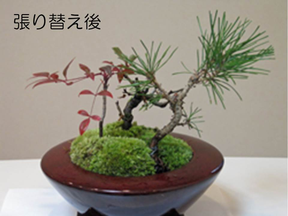 大手町デンタルクリニックの院内の正月の鉢植え02