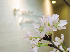 大手町の歯医者(歯科)の受け付の桜