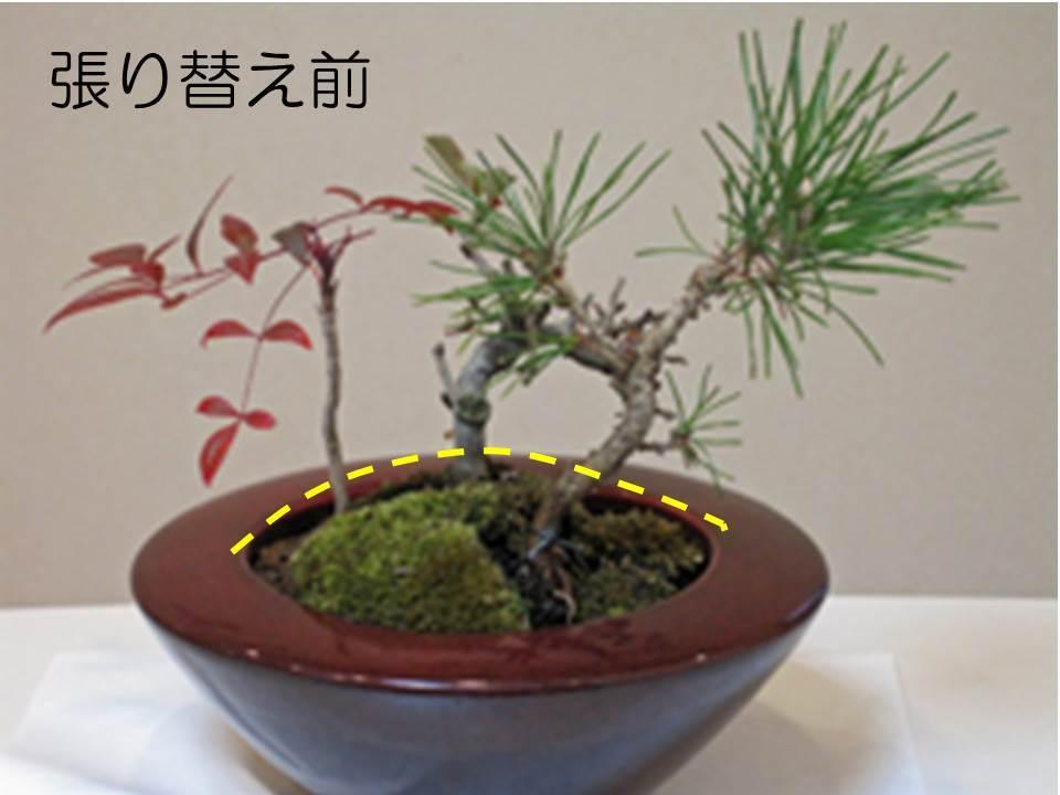 大手町デンタルクリニックの院内の正月の鉢植え01