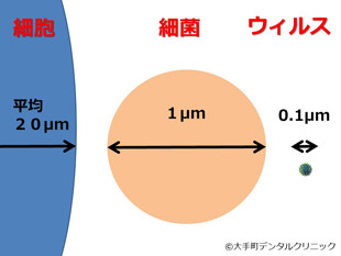 細胞と細菌とウィルスの大きさの比較