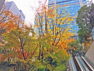 東京都千代田区の大手森の紅葉の様子2018年12月22日