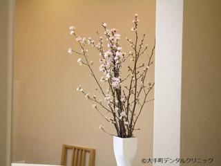 1月の生花は桜です